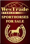 Warmbloods for sale.