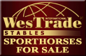 Sporthorses for sale.